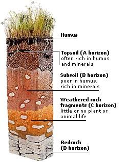 Environment 11 soil by leah for Soil encyclopedia